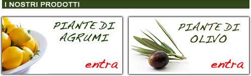 Vivai piante hortus vivai vivaio piante alberi vendita for Acquisto piante olivo